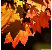 66 Wallpaper Autumn Note 3 Image  &gt&gt&gt Best HD
