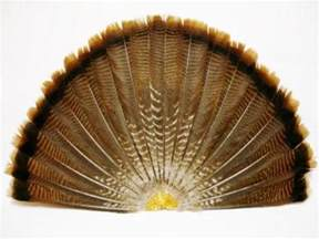 wild turkey feathers ebay