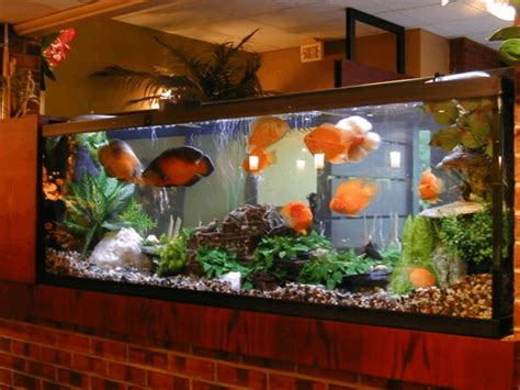 aquarium for home simple vastu tips for keeping an aquarium in your home
