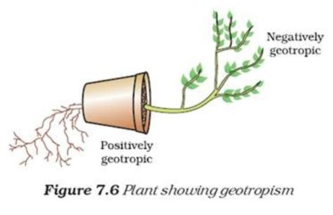 tropic movements in plants biology x and coordination coordination in