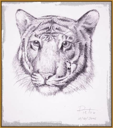 imagenes blanco y negro para dibujar a lapiz imagenes de tigres para dibujar a lapiz archivos