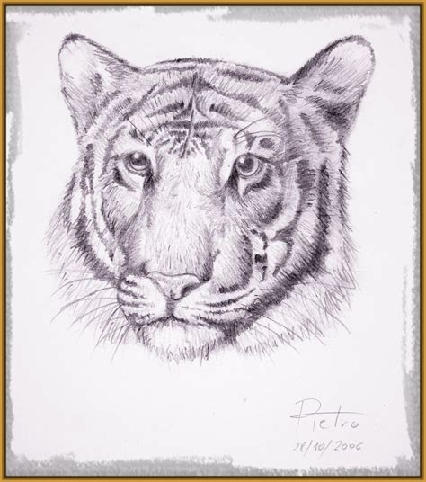 imagenes a lapiz para dibujar de animales imagenes de tigres para dibujar a lapiz archivos