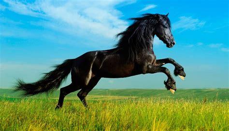 imagenes animales exoticos hermosos galer 237 a de im 225 genes los animales m 225 s bonitos del mundo