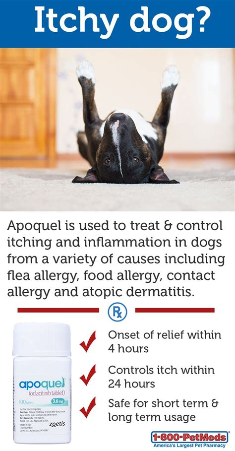 allergy medicine apoquel 17 best images about managing pet skin allergies on allergies pet news