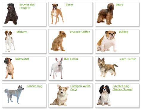 types of dogs dog breeds dog