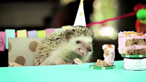 Happy Birthday Meme Gif - happy birthday eating gif find share on giphy