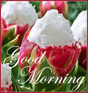 good morning beautiful flowers pictures photos and images for facebook pinterest and