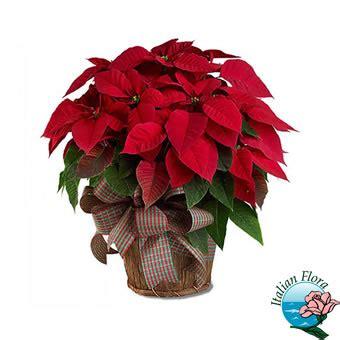 invio fiori a domicilio fiori a domicilio in italia consegna invio e vendita