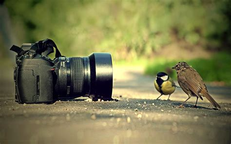 bird and camera wallpaper pc wallpaper wallpaperlepi