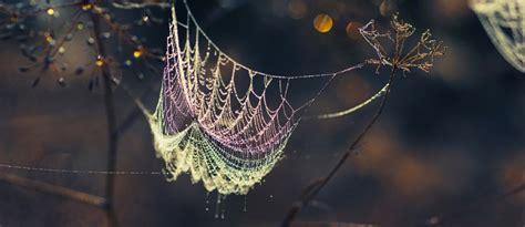 spider web love quotes quotesgram