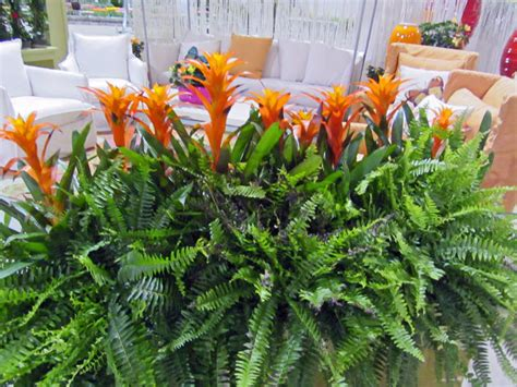 Flowers For Planter Boxes In Sun by Gatsbys Gardens Mar 21 2012