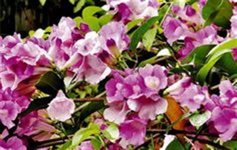 Jual Berbagai Jenis Teh Bunga Melati Flower Tea bunga euphorbia penyebab kanker harga euphorbia cara menanam bunga euphorbia nama bunga