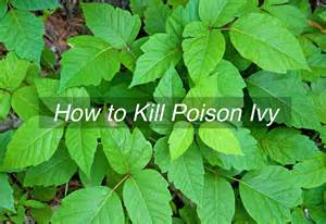 how to kill poison ivy apps directories