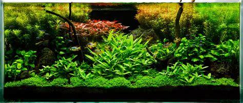 planted aquarium aishwarya pets