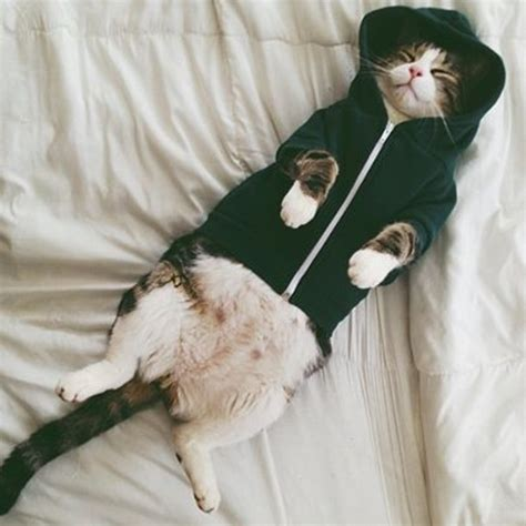 cute pictures  pets wearing clothes