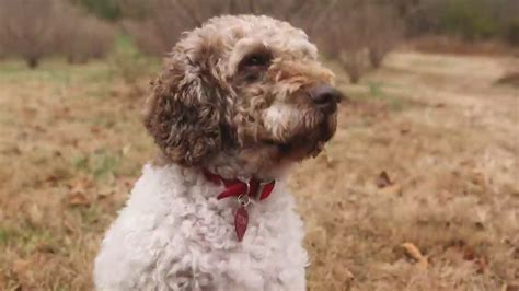 truffle dogs truffle goes to the dogs cnn