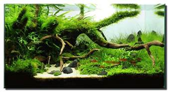 driftwood aquascape aquascape of the month july 2012 quot the only way