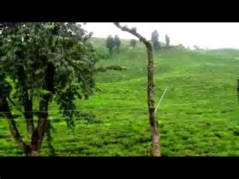 tea capital  bangladesh awesome sreemangal tea