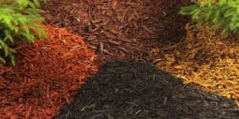 Best Mulch For Garden by Daylilies In Australia Best Mulches For Gardening Best