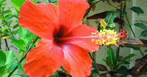 bunga sepatu struktur gambar  bagian bagiannya