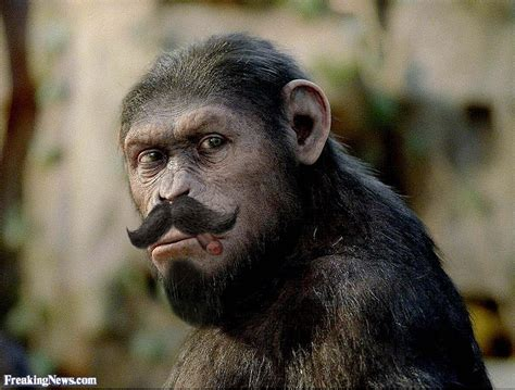 Funny Apes Pictures - Freaking News