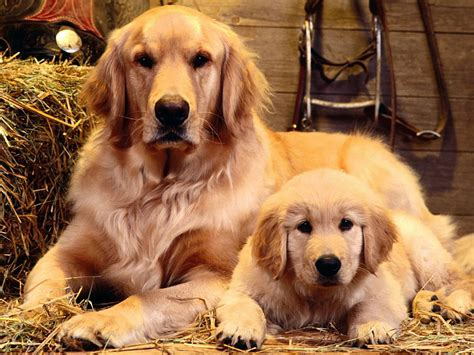a baby puppy free wallpaper of a and baby free wallpaper world