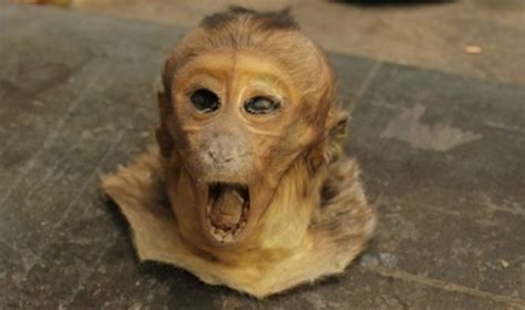 vulture taxidermy ebay ebay taxidermist daniel stocks jailed for selling pickled monkey heads and stuffed vultures