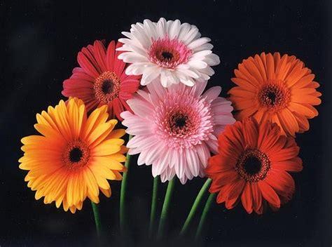 world best flower best flowers in the world best flowers of hawaii