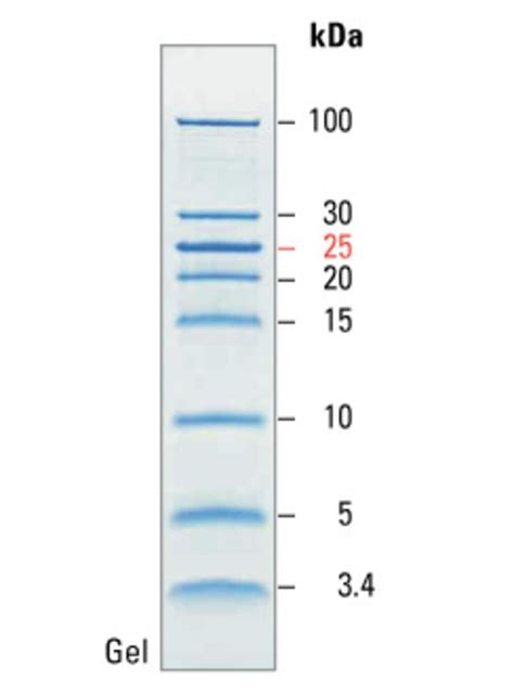 protein ladder pageruler unstained low range protein ladder thermo