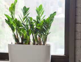 the best indoor plants 10 best indoor plants for men gear patrol