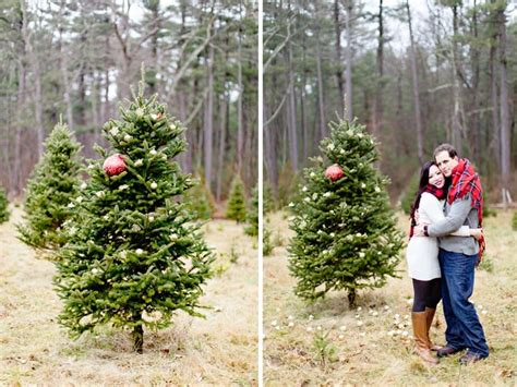 christmas tree farms in massachusetts catchy collections of tree farms ma fabulous homes interior design ideas
