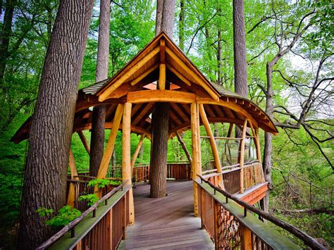 red hill treehouses love  peninsula