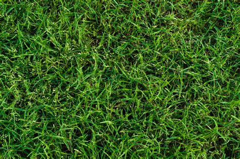 top 28 hybrid grass types what is hybrid bluegrass