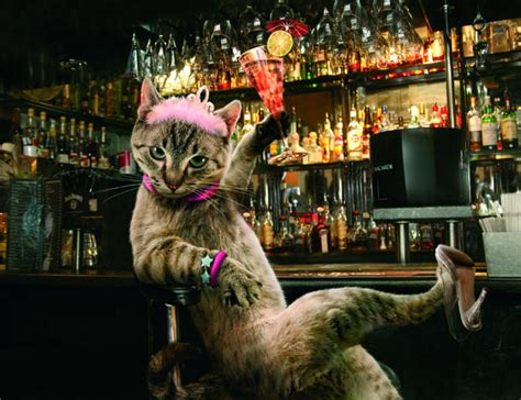 we re gonna have a house party weekend at becca s aka when the cat s away koch s tour