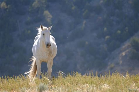 White Mustang Horse Www Imgkid Com The Image Kid Has It