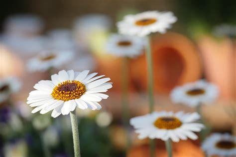 elenco nomi dei fiori nomi dei fiori pi 249 comuni
