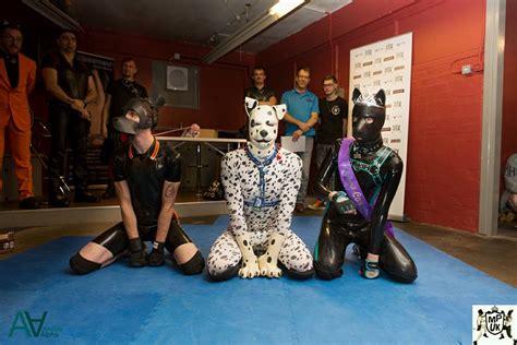 websites to buy puppies zentaispot is mr puppy uk 2016 leatherhistory eu