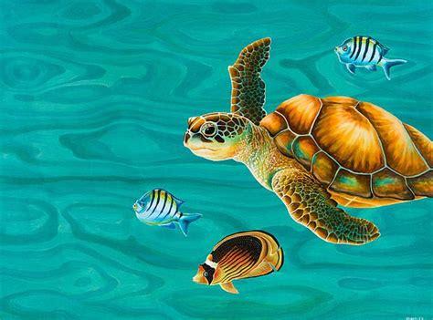 google images turtle google image result for http images fineartamerica com