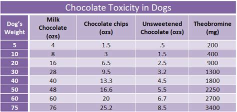 chocolate toxicity 5 safety tips for pets