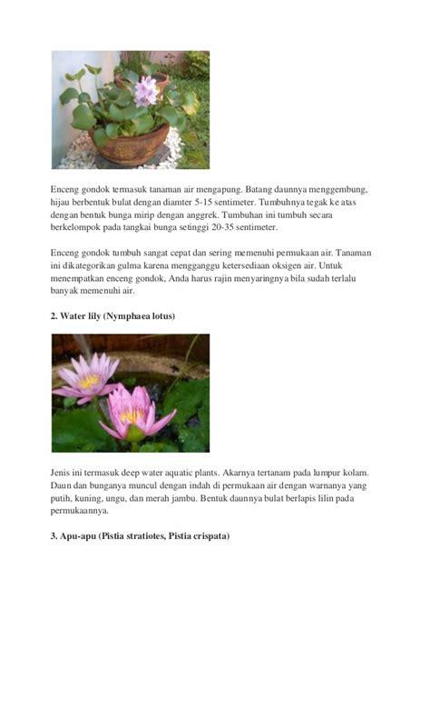 Tanaman Hias Air Apu Apu 5 Pcs tanaman air