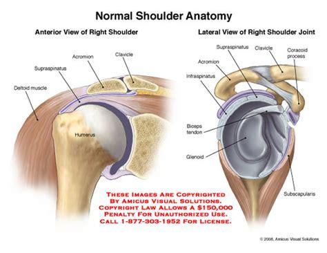 diagram of left shoulder human anatomy diagrams human shoulder joint anatomy