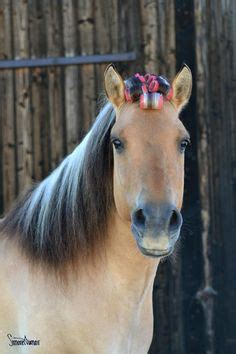 cute hairstyles for horses horse hairstyles on pinterest 141 pins on horse mane