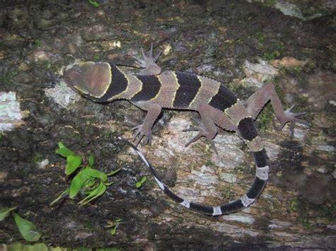 serpente volante wwf dallo scoiattolo volante al serpente zorro scoperte