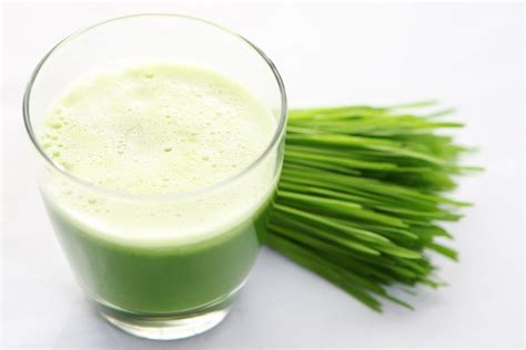 Wheatgrass Detox Side Effects by What Are The Benefits Of Wheatgrass Juice