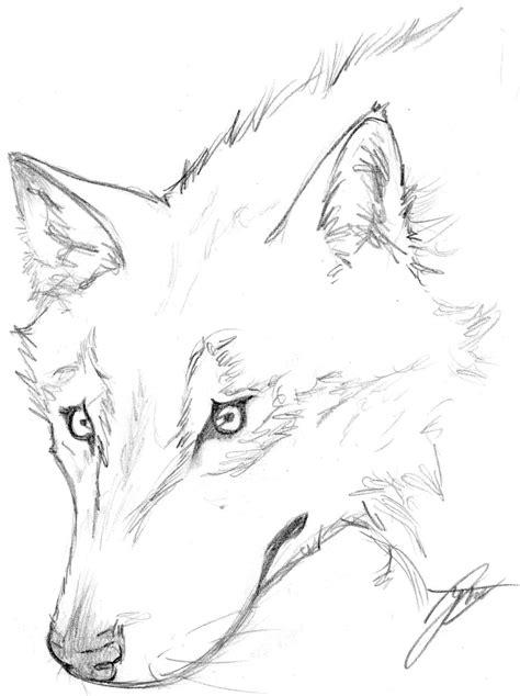 imagenes para dibujar a lapiz de lobos dibujos de lobos imagui