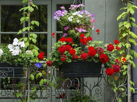 piante da terrazza le piante da balcone colorate e profumate itaeuropaunita