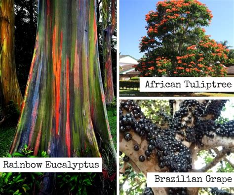 Trees From Around The World by Strange Trees Form Around The World