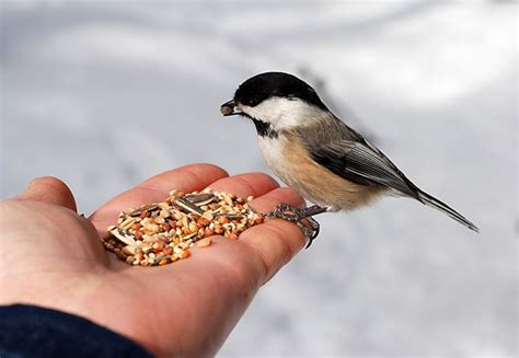be happy now feed the birds