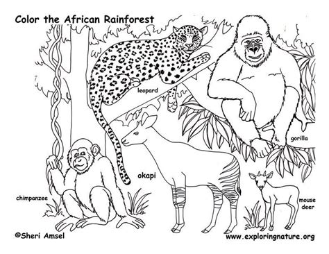 printable coloring pages jungle jungle coloring pages free az coloring pages