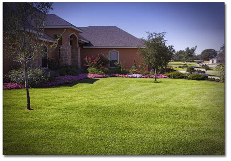 front yard grass www pixshark com images galleries with a bite